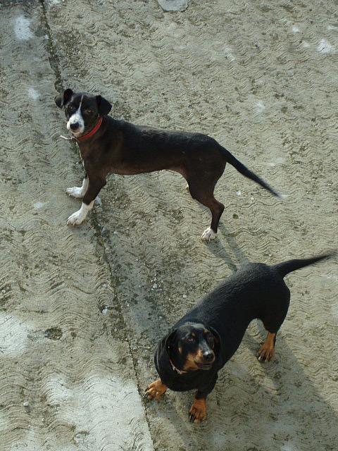 Lila & Gilda