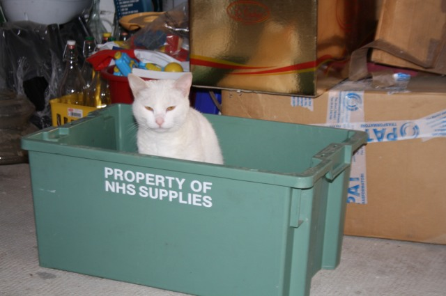 Scooby Doo lives in a box in the garage. Although he is not completely happy with this arrangement.