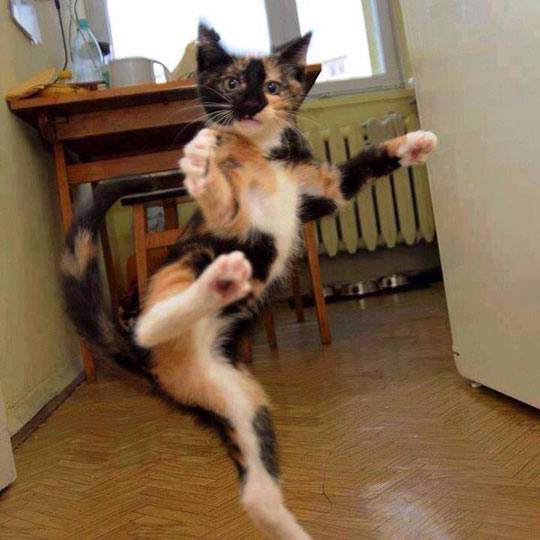 we are training our cats in Karate