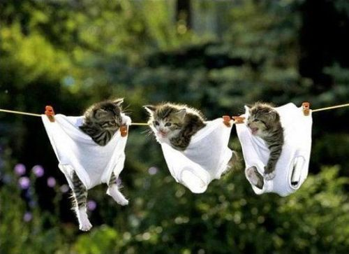 No these aren't our scabby cats nor are they Mrs Sensible's knickers