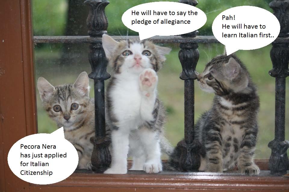 Pecora Nera cats