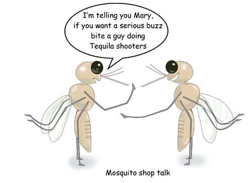 891ea95cda44f6590dd1ab0528bd3177--bug-mosquitoes