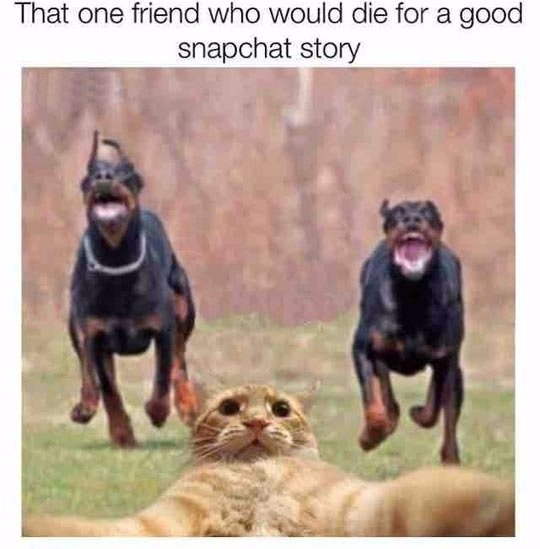 funny-dogs-running-chasing-cat